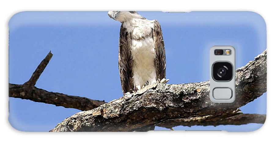 Osprey Galaxy S8 Case featuring the photograph Osprey In The Trees by David Lee Thompson