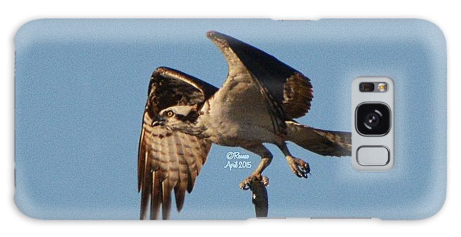 Osprey Galaxy Case featuring the photograph Osprey Natures Way lll by Rennae Christman