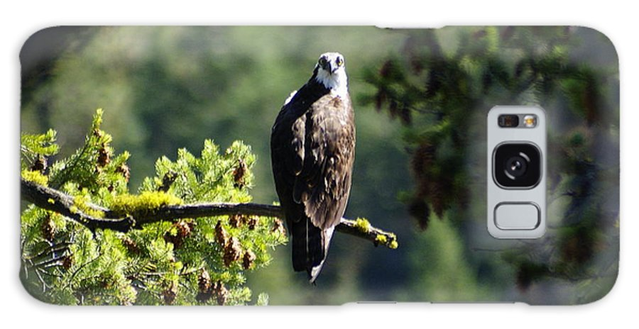 Spokane Galaxy S8 Case featuring the photograph Osprey On Branch by Ben Upham III