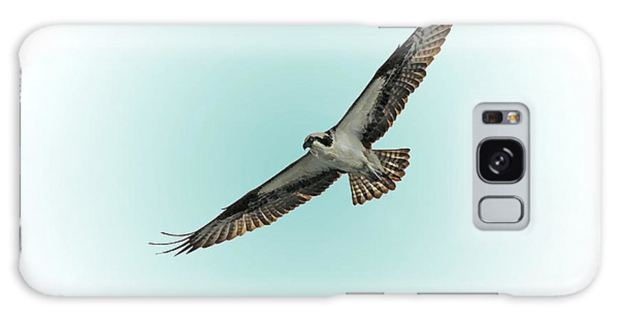 Bird Galaxy S8 Case featuring the photograph Osprey Soar 2 by Deborah Benoit