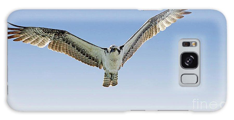 Osprey Galaxy S8 Case featuring the photograph Osprey Soar Search by Deborah Benoit