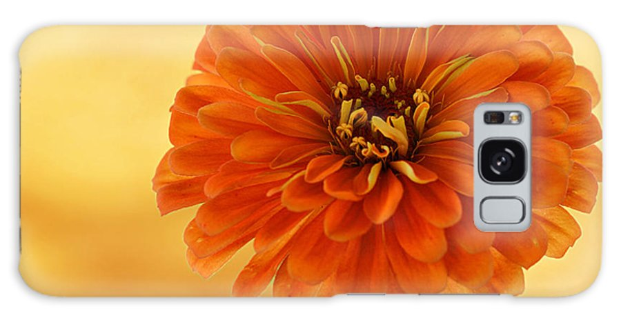 Flower Galaxy S8 Case featuring the photograph Outrageous Orange by Sandy Keeton