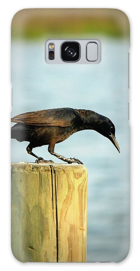 Black Bird Galaxy S8 Case featuring the photograph Over The Edge by Mandy Shupp