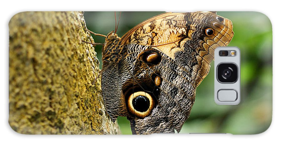 Butterfly Galaxy S8 Case featuring the photograph Owl Butterfly by Sandy Keeton