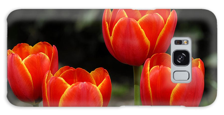 Tulips Galaxy Case featuring the photograph Pacific Northwest Tulips 5 by Keith Gondron