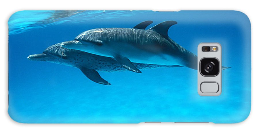 Animal Art Galaxy S8 Case featuring the photograph Pair Of Spotted Dolphins by Ed Robinson - Printscapes