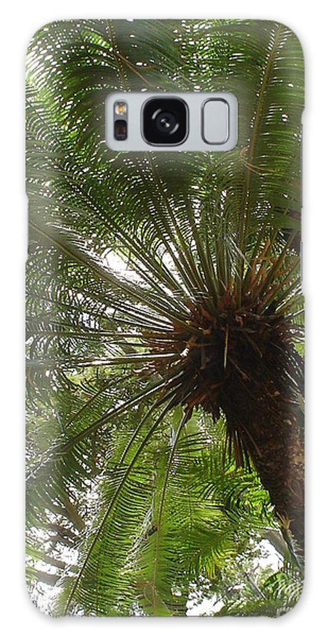 Palm Tree Galaxy S8 Case featuring the photograph Palm by Chandelle Hazen