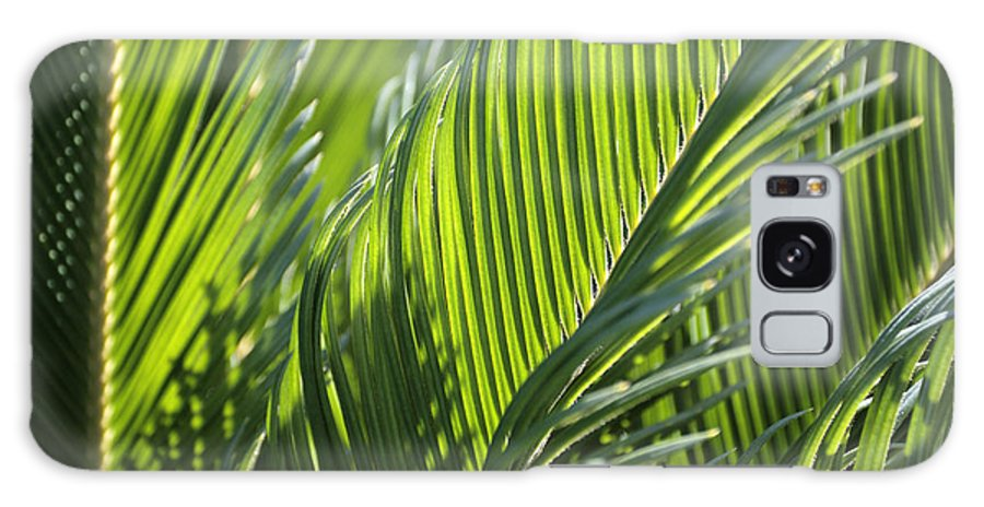 Palm Galaxy S8 Case featuring the photograph Palm Leaf by Phil Crean