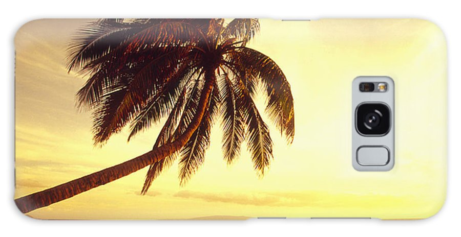 66-csm0125 Galaxy S8 Case featuring the photograph Palm Over The Beach by Ron Dahlquist - Printscapes
