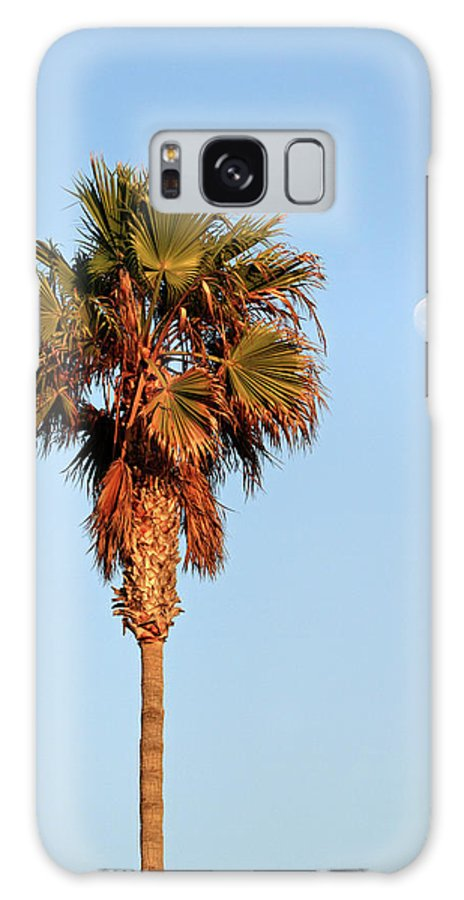 Palm Galaxy S8 Case featuring the photograph Palm Tree In Huntington Beach by Pierre Leclerc Photography