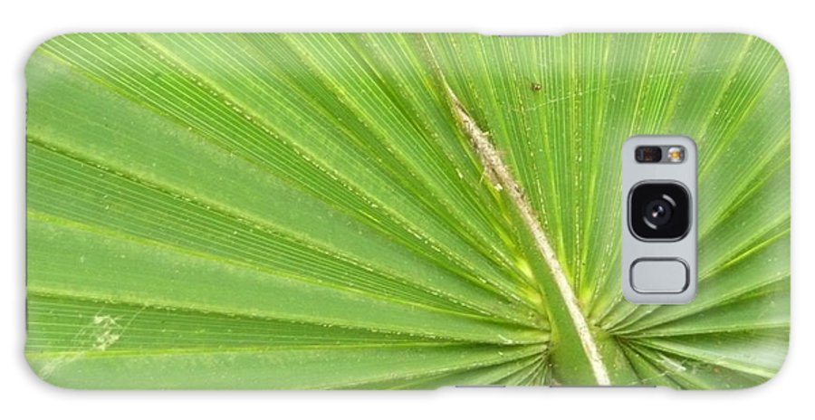 Palmetto Galaxy S8 Case featuring the photograph Palmetto II by Kathy Schumann