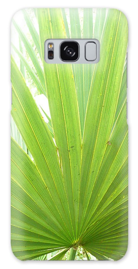 Green Galaxy Case featuring the photograph Palmetto by Kathy Schumann