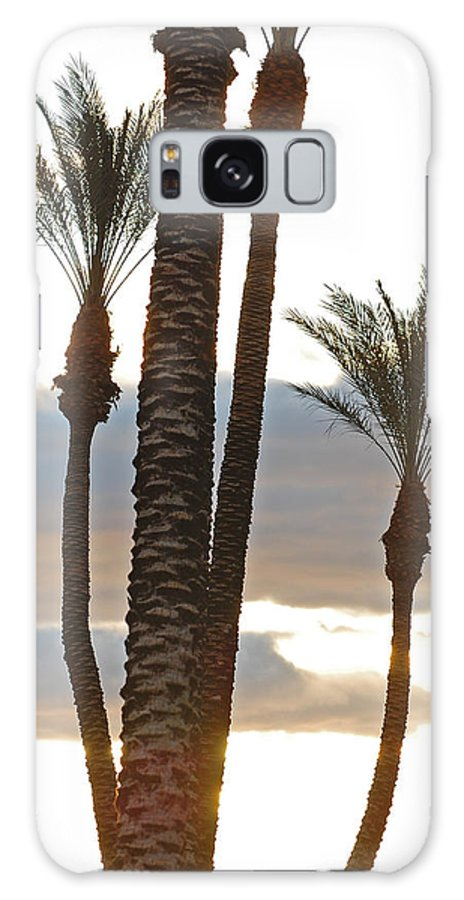 Photo Galaxy S8 Case featuring the photograph Palms And Light by Jean Booth