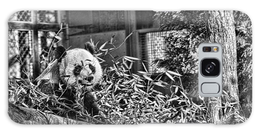 Panda Galaxy S8 Case featuring the photograph Panda Feast by Jody Lovejoy