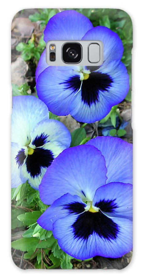 Flowers Galaxy S8 Case featuring the photograph Pansies 0823 by Guy Whiteley