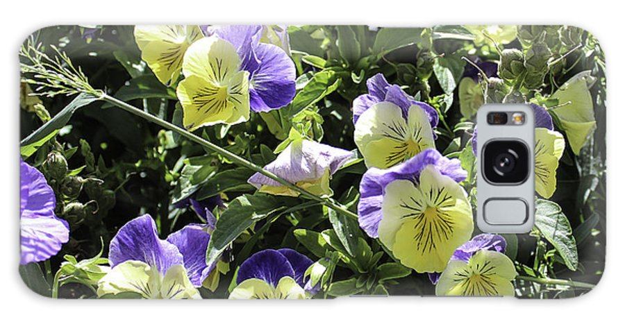 Pansies Galaxy S8 Case featuring the photograph Pansies by Lorraine Baum