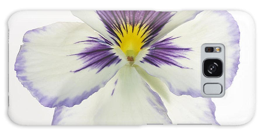 Pansy Genus Viola Galaxy S8 Case featuring the photograph Pansy 2 by Tony Cordoza
