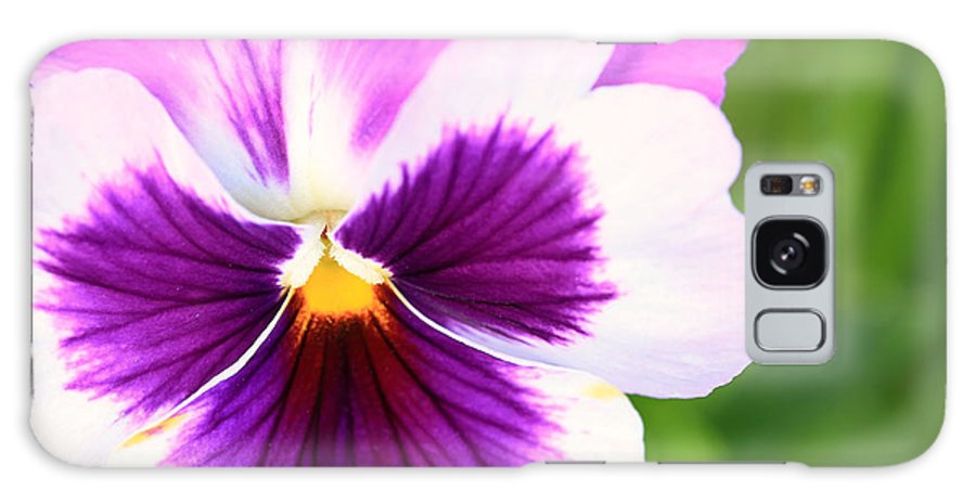 Landscape Galaxy S8 Case featuring the photograph Pansy Wave by Janice Bajek