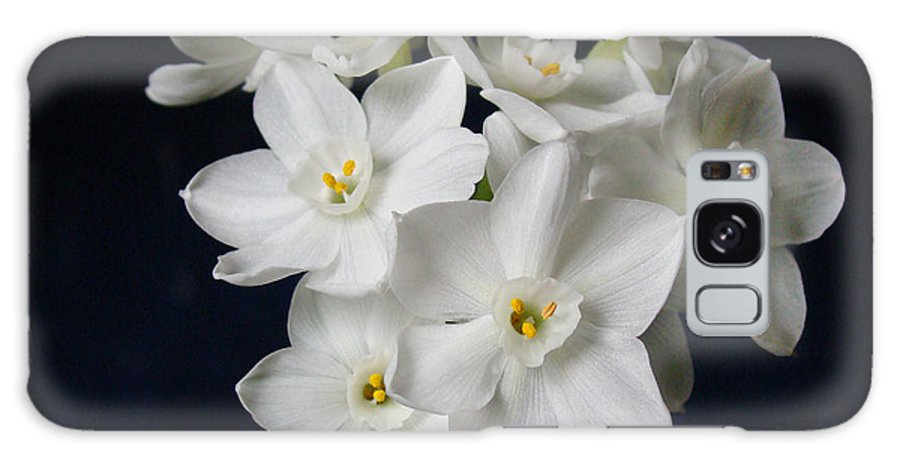 Paperwhite Flowers Galaxy S8 Case featuring the photograph Paperwhites by Sandy Keeton