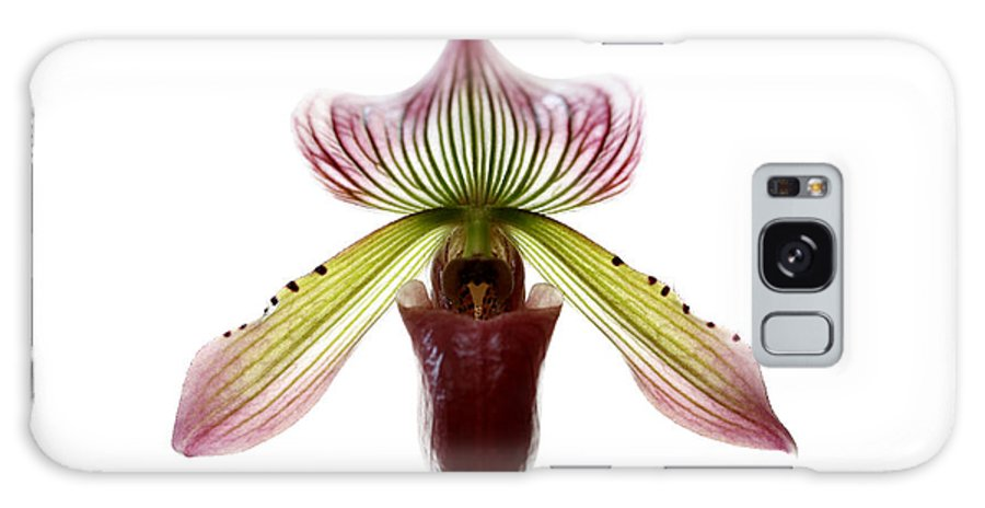 Orchid Galaxy S8 Case featuring the photograph Paphiopedilum Lawrenceanum by Marilyn Hunt