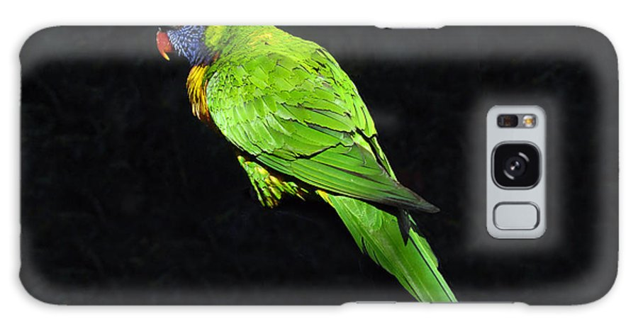 Parrot Galaxy S8 Case featuring the photograph Parrot In Black by David Lee Thompson