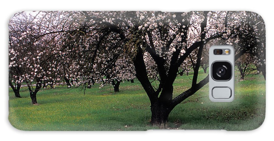 Orchards Galaxy S8 Case featuring the photograph Paso Robles Orchard by Kathy Yates