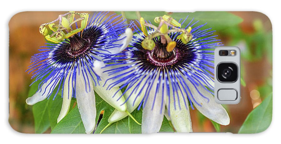 Passion Flower Galaxy S8 Case featuring the photograph Passion Flower Power by Kristofer M Johnson