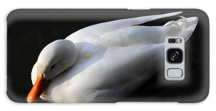 Bird Galaxy S8 Case featuring the photograph Peace by Lawrence Christopher