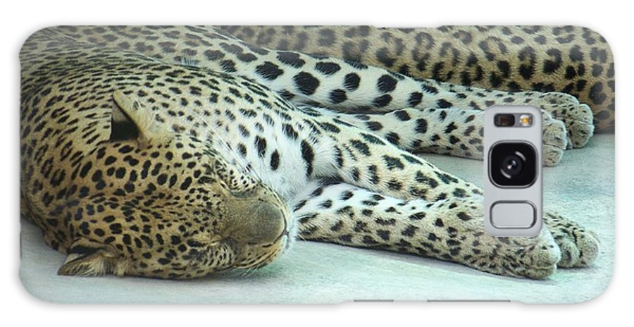 Chetah Galaxy S8 Case featuring the photograph Peaceful Sleep by Laurie Paci