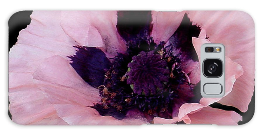 Cutout Galaxy S8 Case featuring the photograph Peach Poppy - Cutout by Shirley Heyn