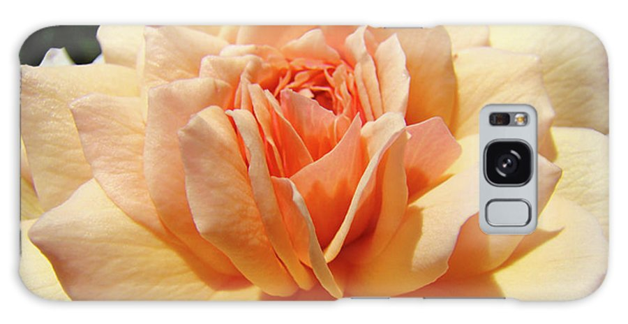 Rose Galaxy S8 Case featuring the photograph Peach Rose Art Prints Roses Flowers Giclee Prints Baslee Troutman by Baslee Troutman