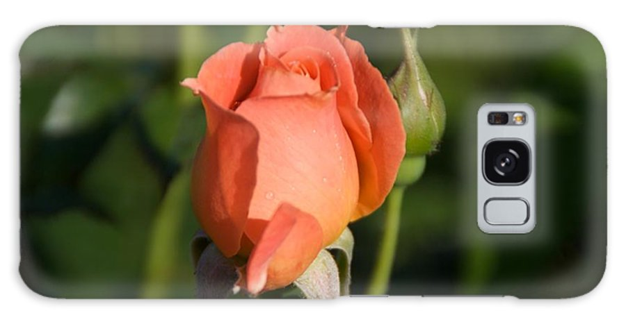 Rose Galaxy Case featuring the photograph Peach Rose by Toni Berry