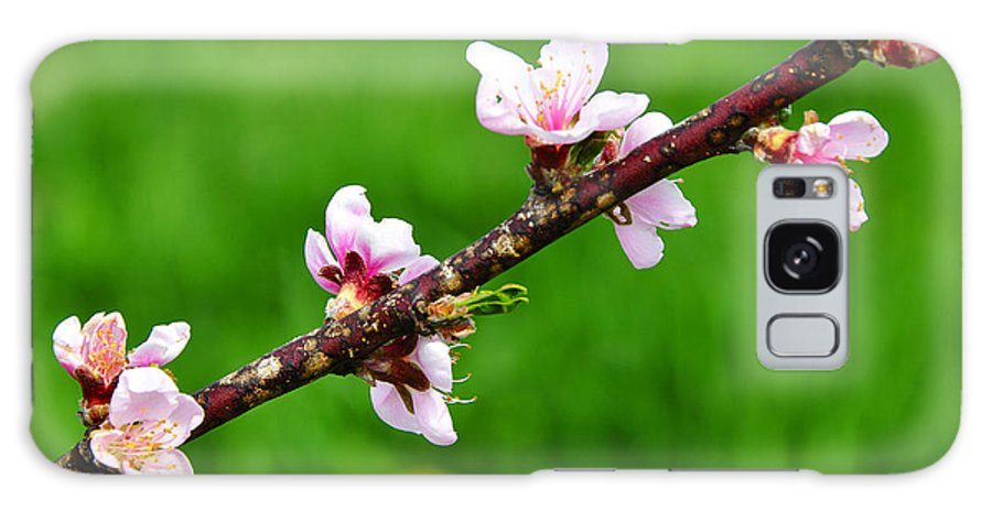 Peach Tree Blossoms Galaxy S8 Case featuring the photograph Peach Tree Blossoms by Thomas R Fletcher