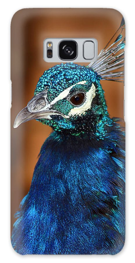 Peacock Galaxy S8 Case featuring the photograph Peacock by Anthony Jones