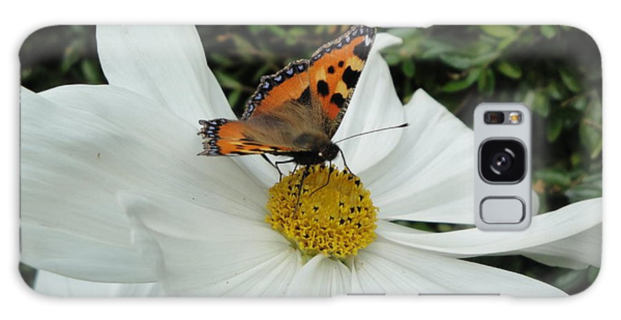 Butterfly Galaxy S8 Case featuring the photograph Peacock Butterfly On Cosmos by Susan Baker