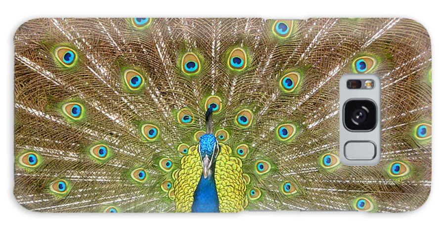 Peacock Galaxy S8 Case featuring the photograph Peacock by David Lee Thompson