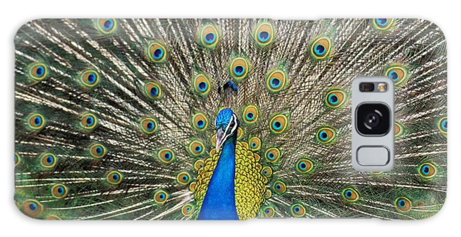 Animal Art Galaxy S8 Case featuring the photograph Peacock by William Waterfall - Printscapes