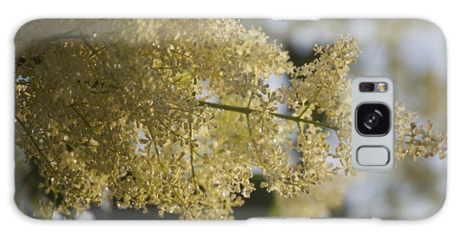 Pear Galaxy S8 Case featuring the photograph Pear Blossom by Faith Harron Boudreau