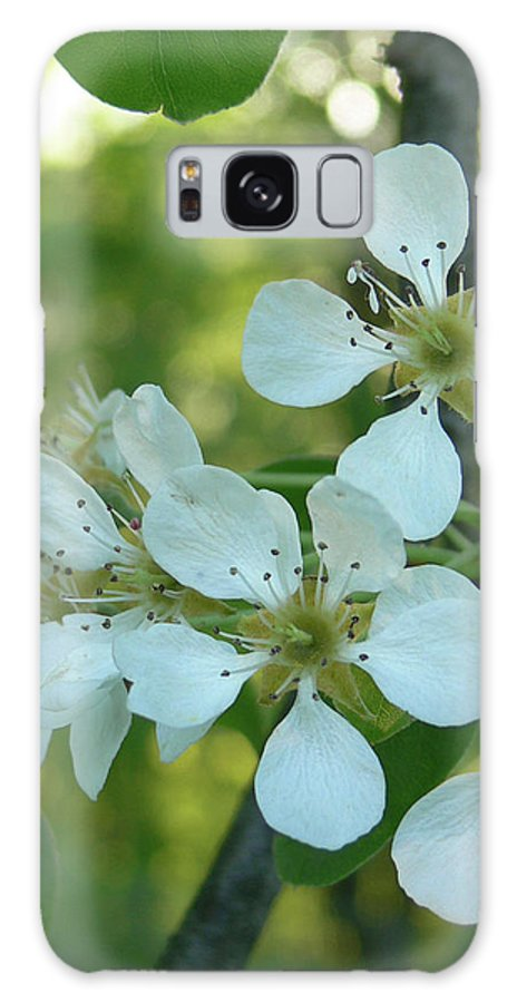 Pear Blossoms Galaxy S8 Case featuring the photograph Pear Blossoms by Natalie LaRocque