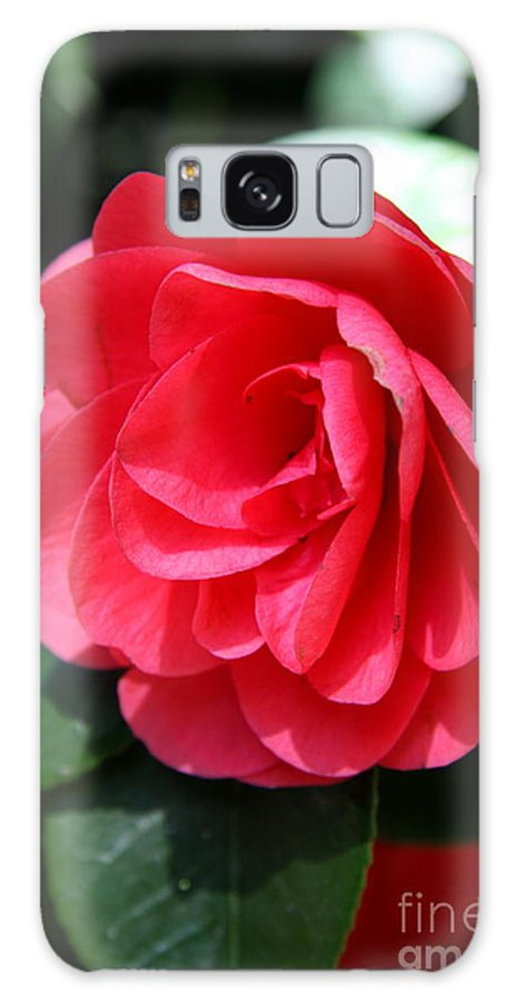Camellia Galaxy S8 Case featuring the photograph Pearl Of Beauty - Red Camellia by Christiane Schulze Art And Photography