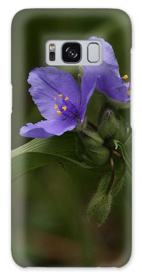 Violet Galaxy S8 Case featuring the photograph Peek A Boo by David Dunham