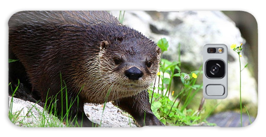 Otter Galaxy S8 Case featuring the photograph Peering Otter by Barbara Bowen