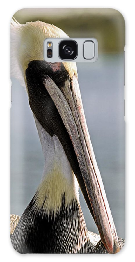 American Brown Pelican Galaxy S8 Case featuring the photograph Pelican Portrait by Sally Weigand