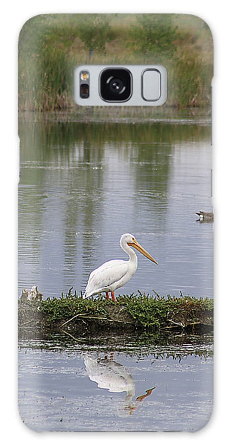 Bird Galaxy S8 Case featuring the photograph Pelican Reflection by Alyce Taylor