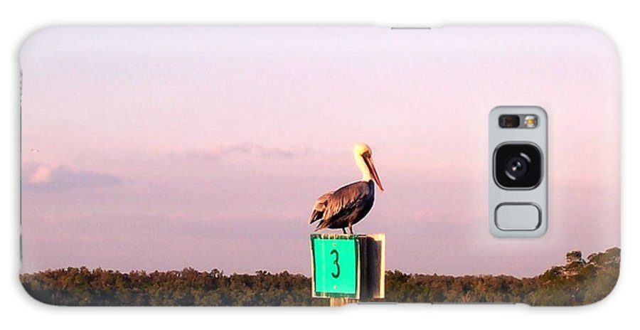 Pelican Galaxy S8 Case featuring the photograph Pelican Roost by Elizabeth Klecker