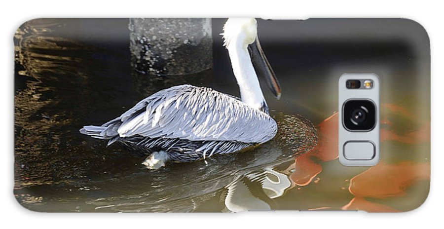 Pelican Galaxy S8 Case featuring the photograph Pelican Swim by Jody Lovejoy