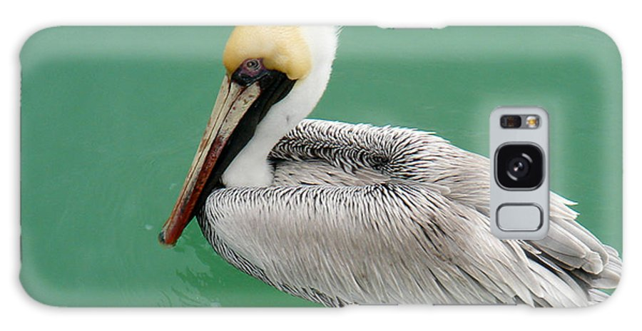 Florida Galaxy S8 Case featuring the photograph Pelican's Cove by Chris Andruskiewicz