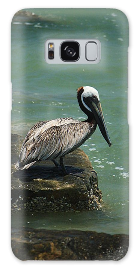 Pelican Galaxy S8 Case featuring the photograph Pelican's Perch by Mandy Shupp