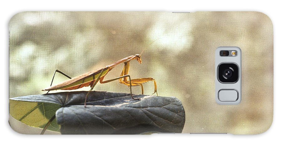 Praying Galaxy S8 Case featuring the photograph Pensive Mantis by Douglas Barnett