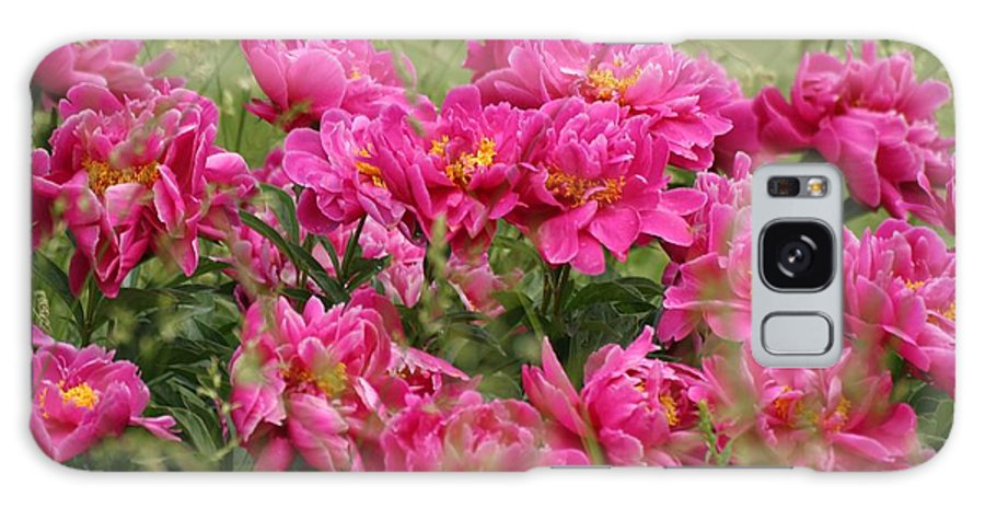Peony Galaxy S8 Case featuring the photograph Peonies by Doris Potter